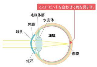 眼の構造.JPG