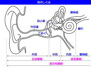 耳図解1.jpg